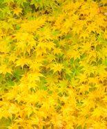日本の美しい四季を表す色名