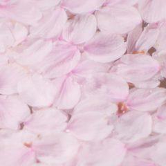 桜貝のようなクリアピンクのネイルをお探しですか?