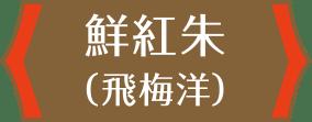 鮮紅朱(飛梅洋)