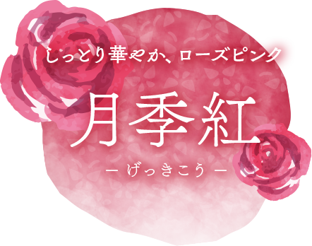 しっとり華やか、ローズピンク「月季紅(げっきこう)」