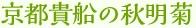 京都貴船の秋明菊