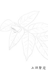 ぬり絵用線画02_カエル